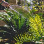 Tuinonderhoud in de zomer